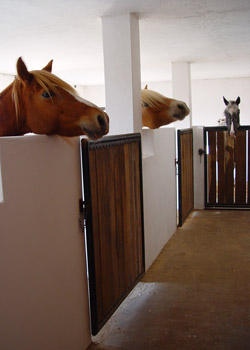 Pferdehotel3-250x350